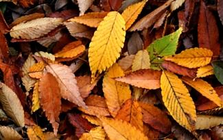 All About Autumn Gardening