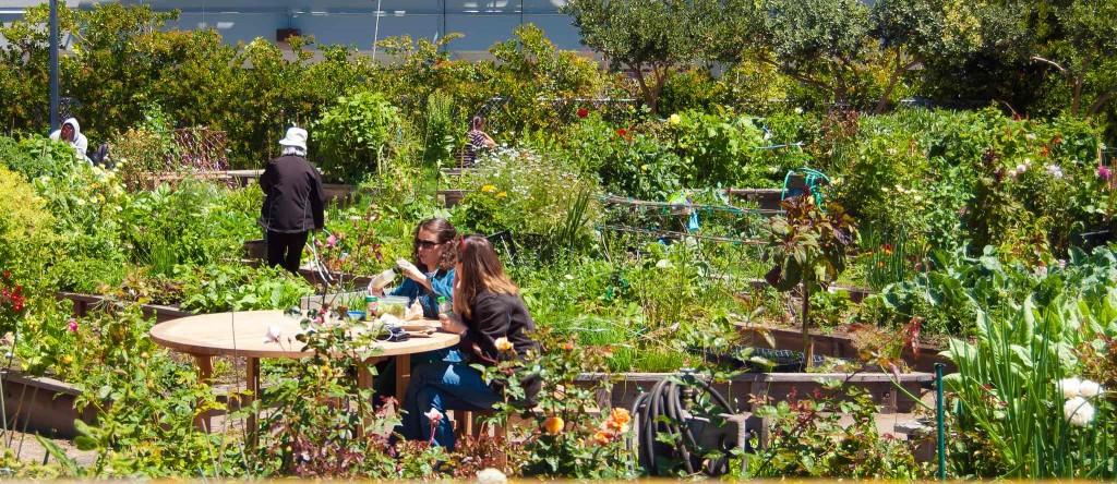 Gardening Without A Yard Minigarden Canada