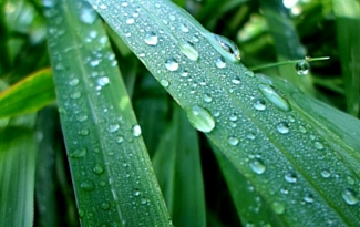 8 Gardening Activities For A Rainy Day