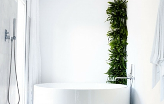 In The News: Minigarden Adds Greenery to Your Home