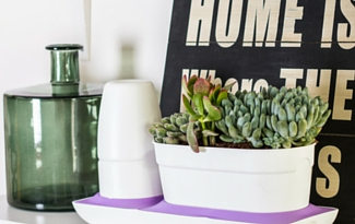 Quiz: Which House Plant is Right for Me?