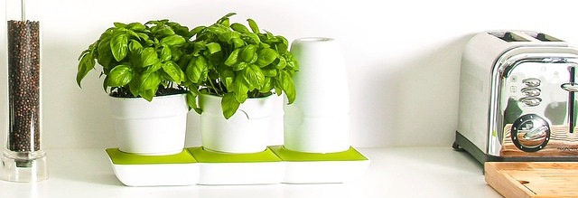 Minigarden Basic Basil Countertop