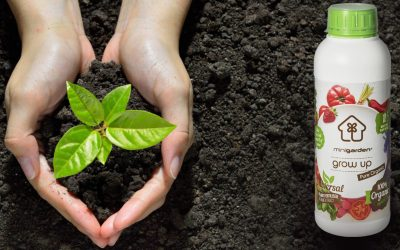 The importance of using organic fertilizers for plant nutrition in contemporary agriculture and gardening